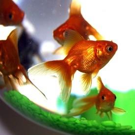 _2800_gold_2900_fish
