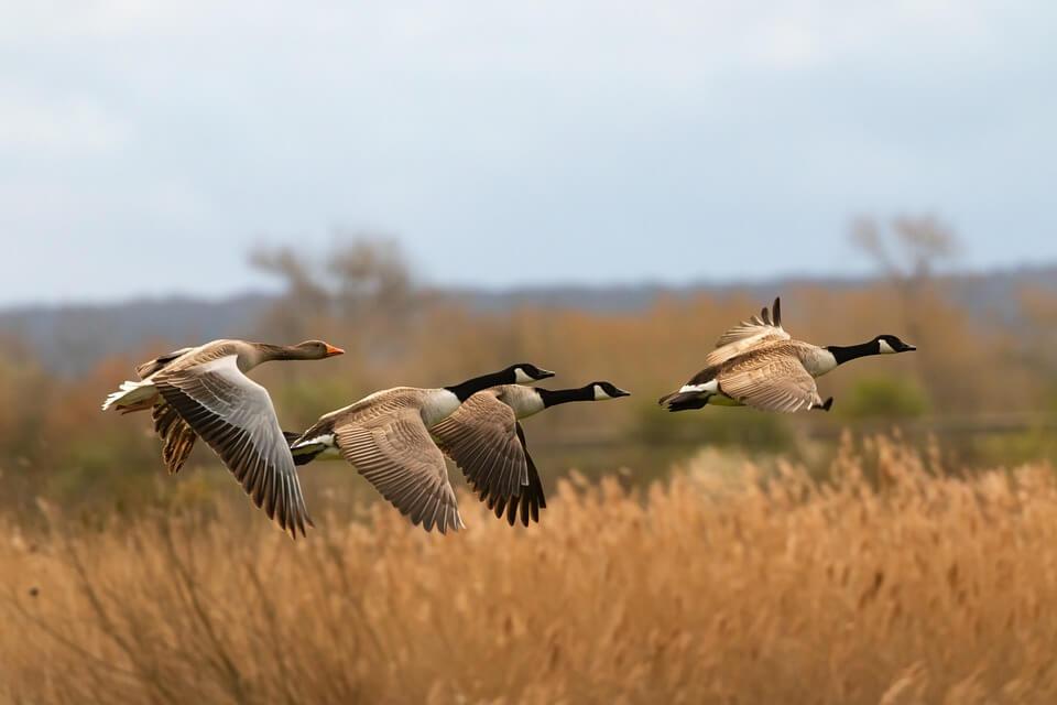 birds in nature