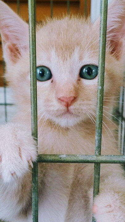 cats sold as 'pets'