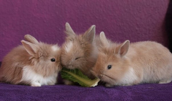 rabbits killed in experiments