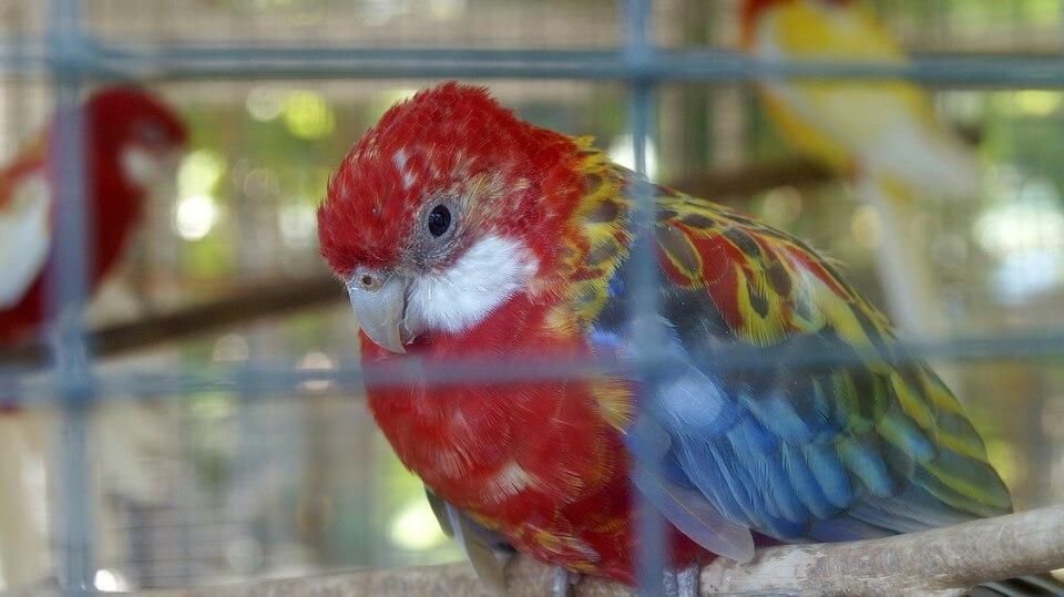 sad bird in cage
