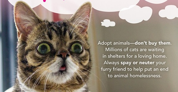 Lil Bub Wants You to Adopt