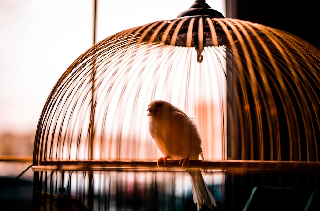 Small Bird in Cage