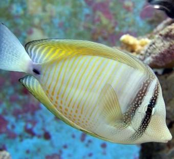 Fish Are Fascinating Animals