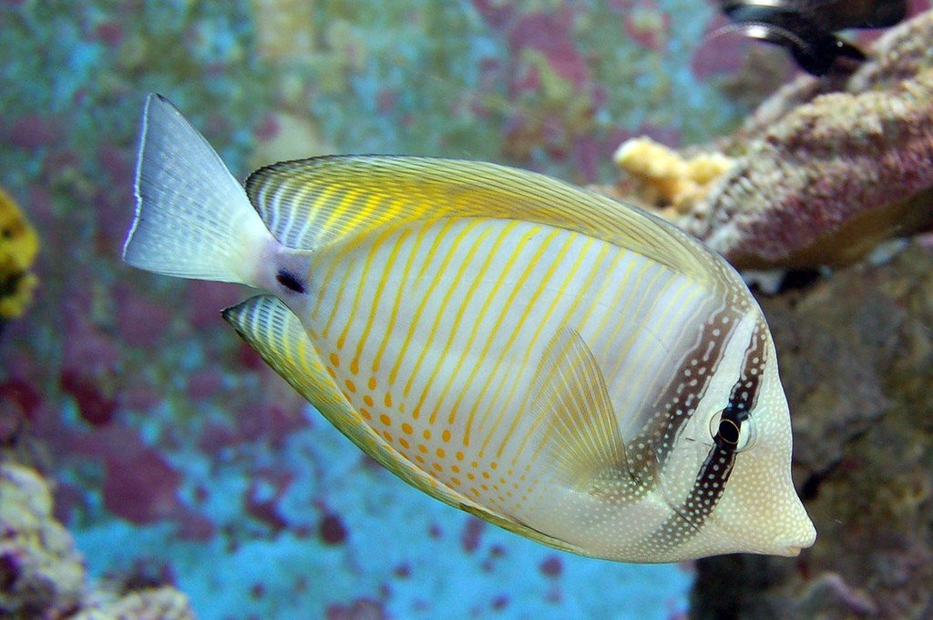 Pretty Yellow Fish Swimming in Water