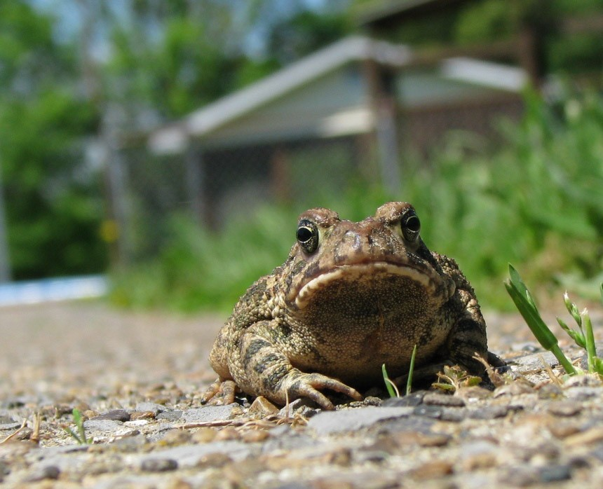 Close Up of Frog Outside