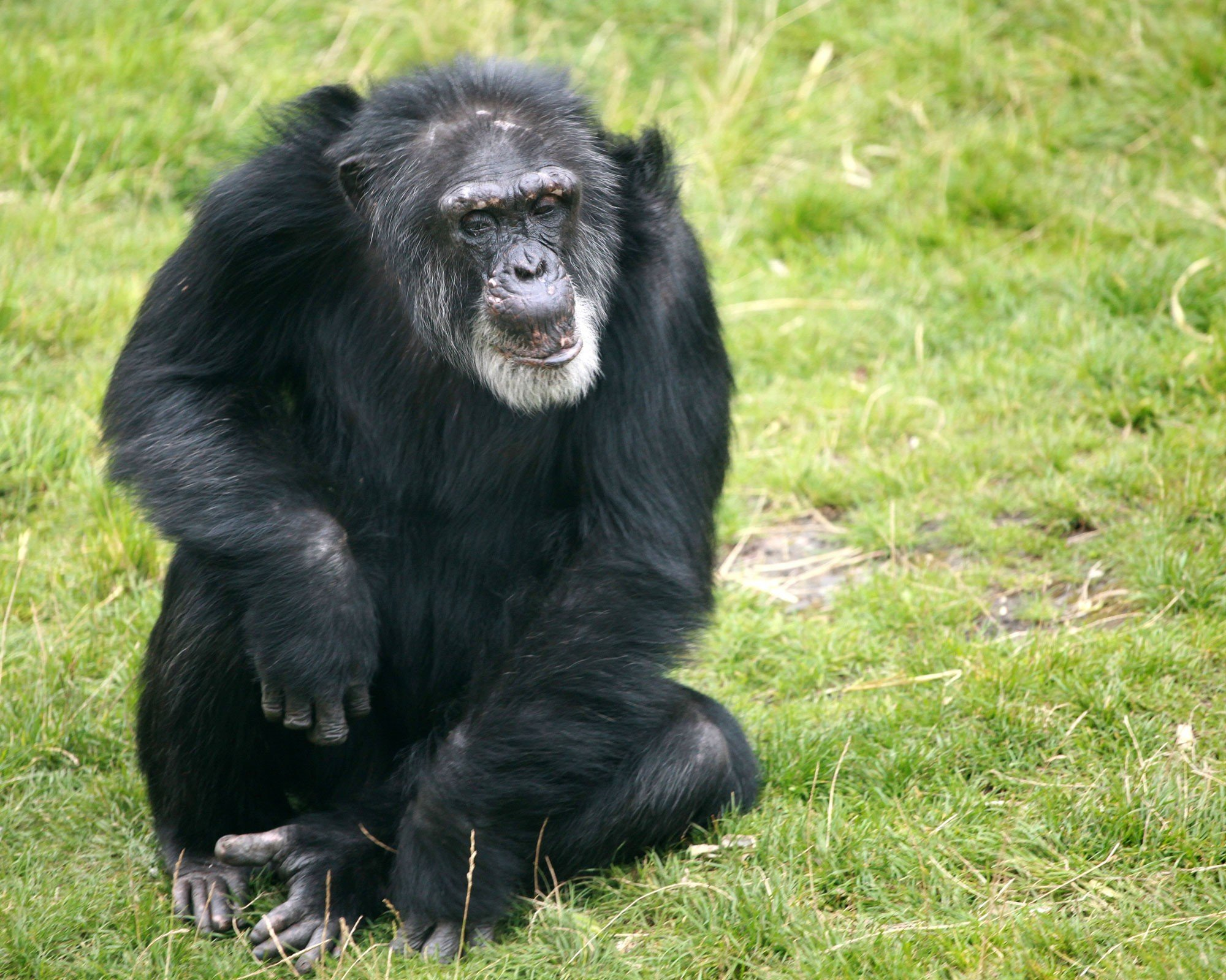 great apes animals used for entertainment animal facts peta kids