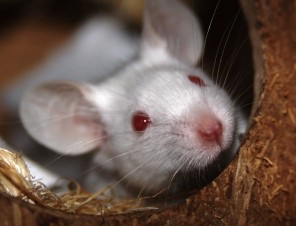 Five Ways That Kids Can Fight Animal Testing