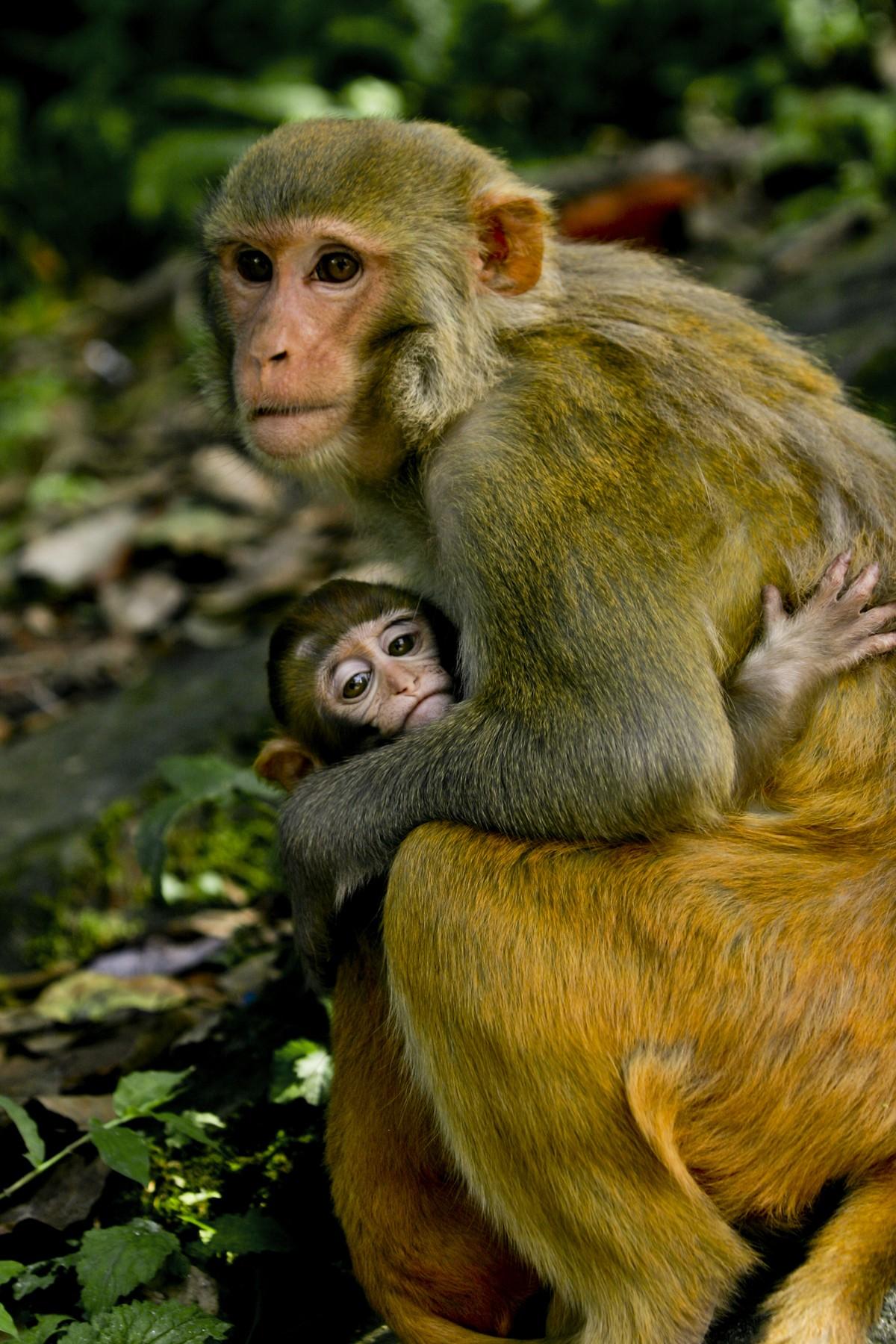 Monkey and Baby Monkey Hugging