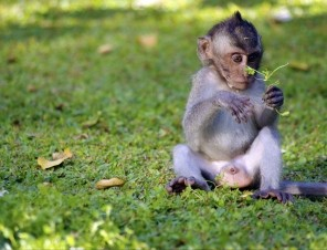 Baby Monkey Outside in Grass