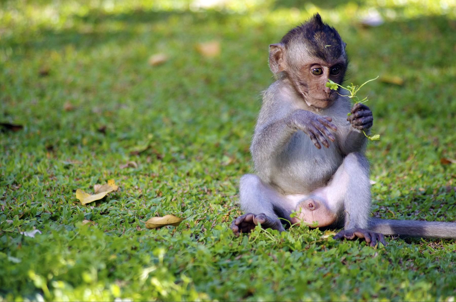 Baby Monkey Outside in Grass