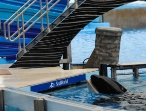 Tell SeaWorld to Free The Whales