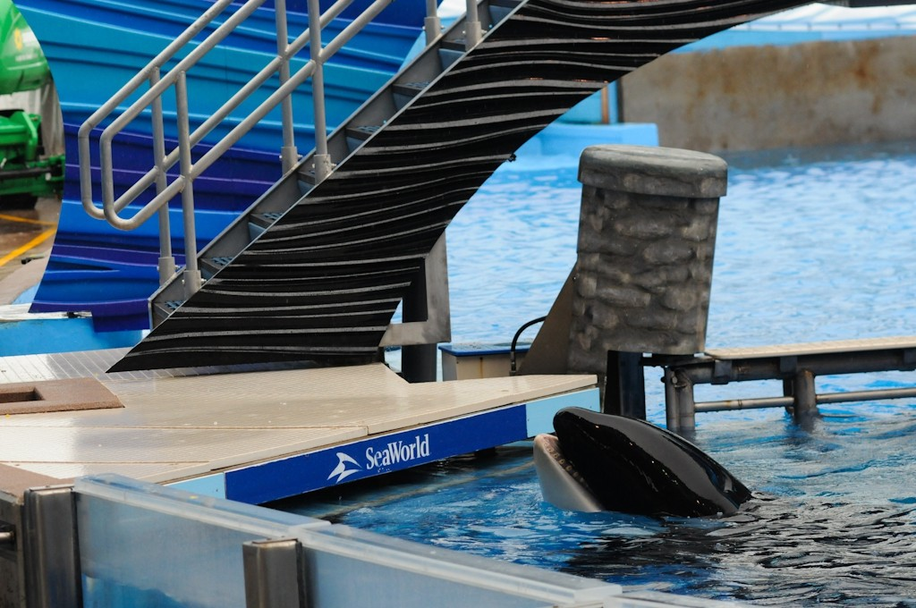 orcas used for entertainment