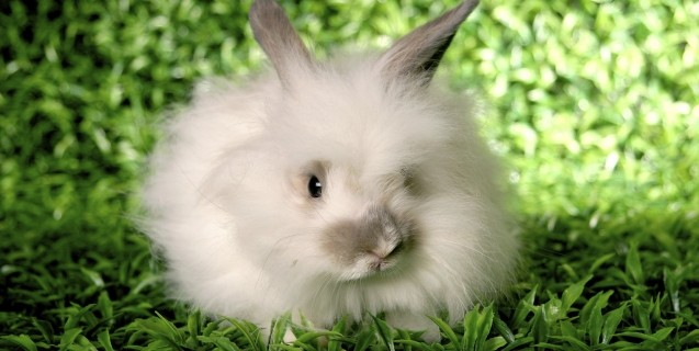 White Rabbit on Grass