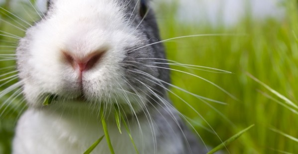 Close Up of Cute Rabbit Outside