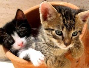 Cute Kittens in Flower Pot