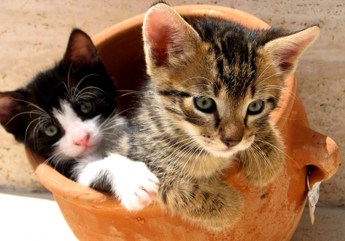 animal-shelter-facts-9