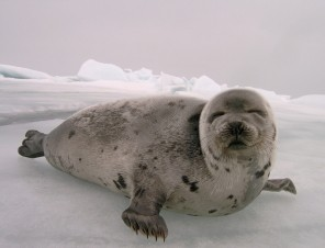 Research Topic: The Canadian Seal Slaughter