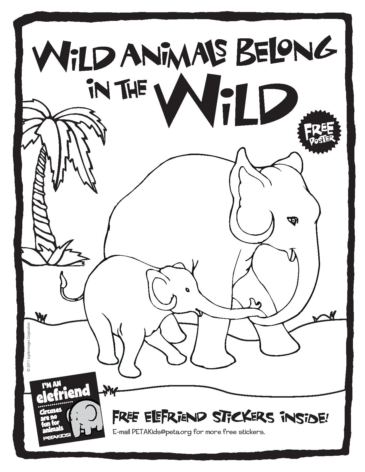 Circus Activity Book: Wild Animals Belong in the Wild (Cover)