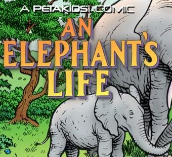 'An Elephant's Life' Comic Book