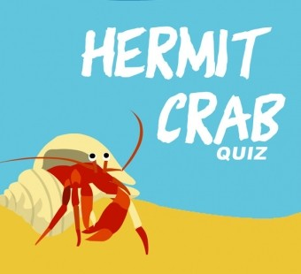 Take Our Hermit Crab Quiz!