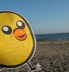Take Nugget on Your Vacation!