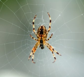 5 Reasons to Love Spiders