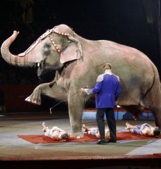 Research Topic: What's Wrong With Circuses?