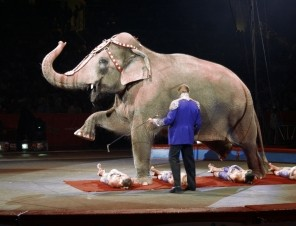 Pledge to Help Animals in Circuses