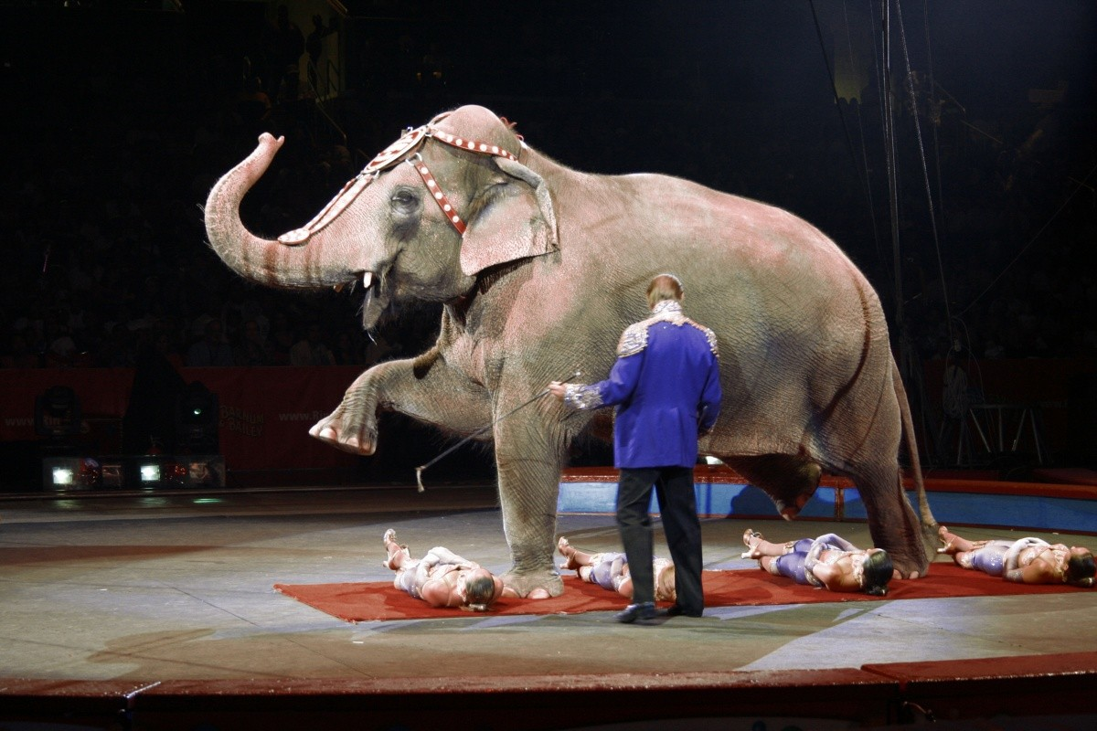 what's-wrong-with-circuses-1