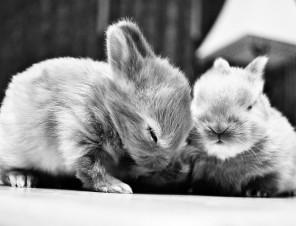 Too Cute to Be Coats!