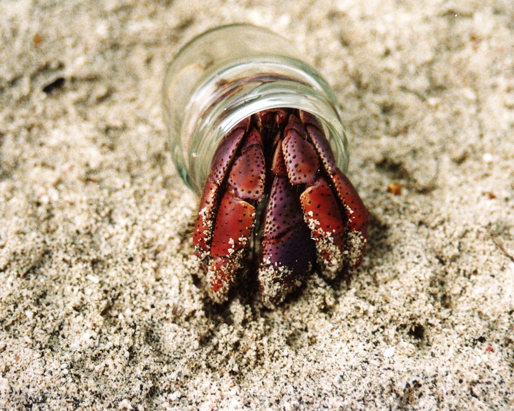Hermit crab in sand