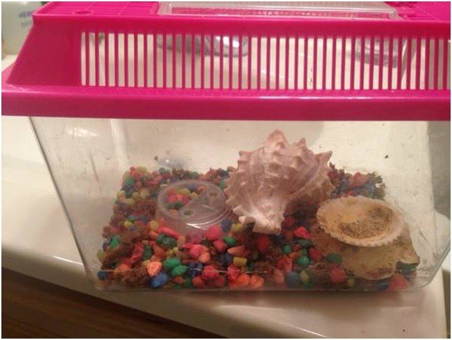 Hermit Crabs in Small Tank