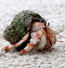 What's Wrong With Buying Hermit Crabs?