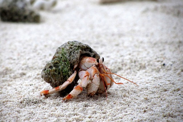 What's Wrong With Buying Hermit Crabs? | Photos | PETA Kids