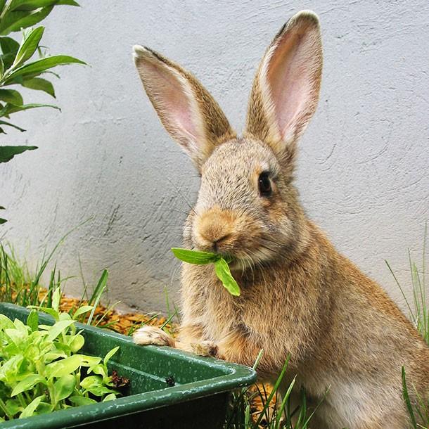 Rabbit Eating Plant