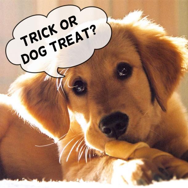 Dog With Treat Halloween