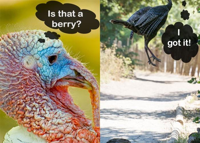 Turkey Jumping Collage