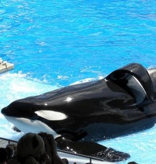 8 Shocking Facts About SeaWorld! Help PETA Save the Whales and Other Animals Trapped There