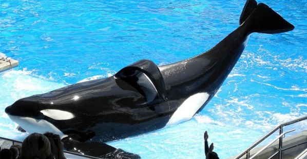 8 Shocking Facts About SeaWorld