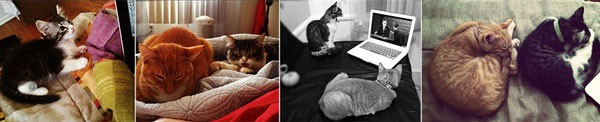 Indoor Cat Collage