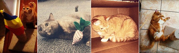 Indoor Cat Kitty Toy Collage