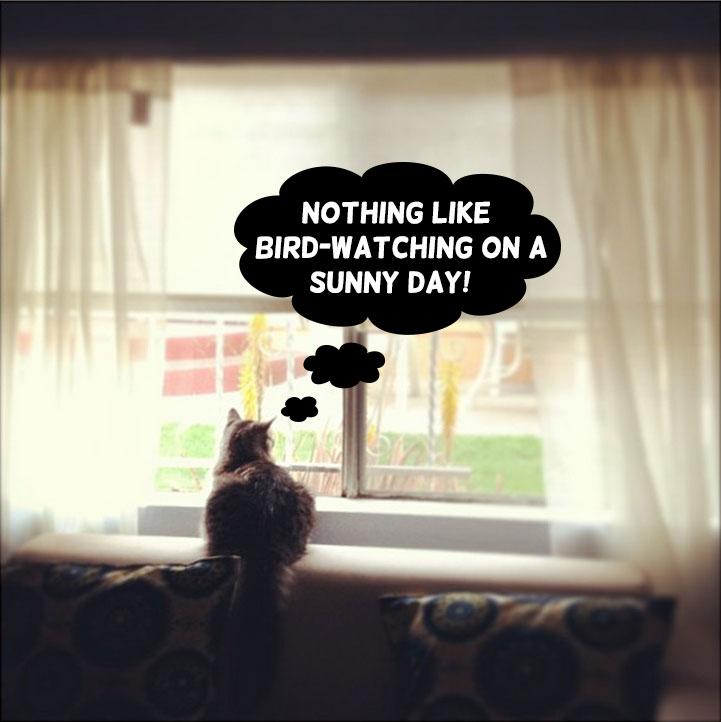 Indoor-Cat-Looking-Out-Window