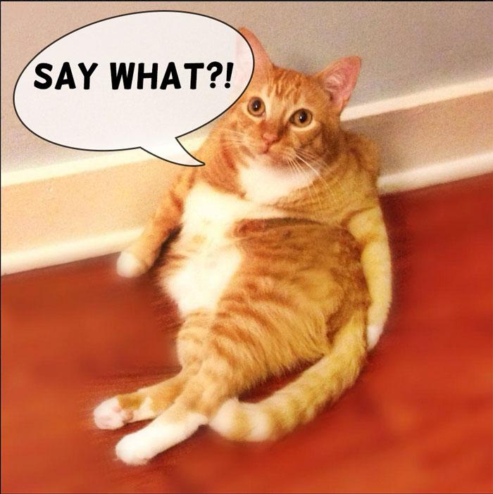 Surprised Indoor Cat