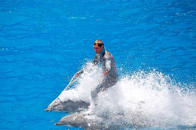 peta campaign to save the whales and dolphins trapped at seaworld