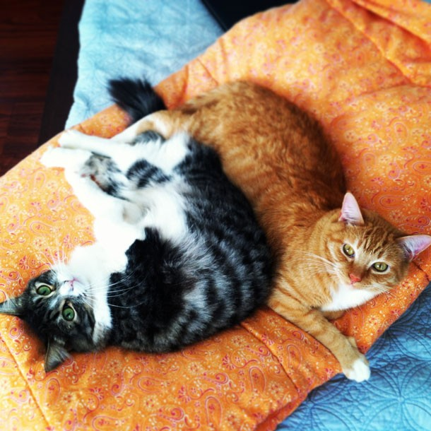Two Cats on Orange Blanket