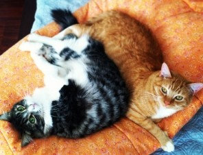 Why 'Indoor Cats' Are the Happiest Cats