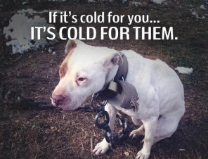 Pledge To Keep Animal Companions Warm