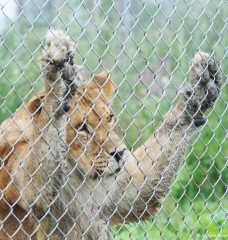 5 Secrets Zoos Don't Want You to Know