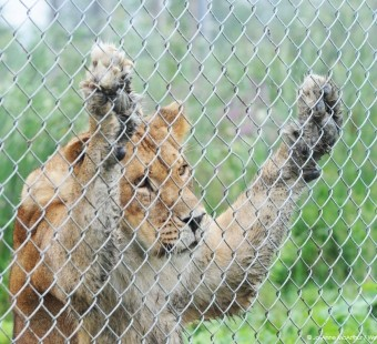 Research Topic: The Truth About Zoos